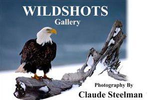 Wildshots gallery